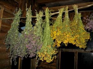 Лекарственные растения - главное средство знахаря