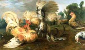 Петушиные бои